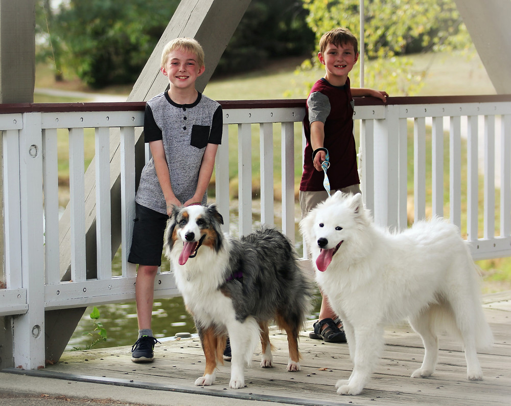 two kids with two mixed-breed dogs