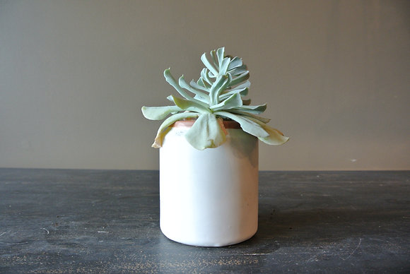 Strappy Leaf Succulent in White & Tan Stripped Pot