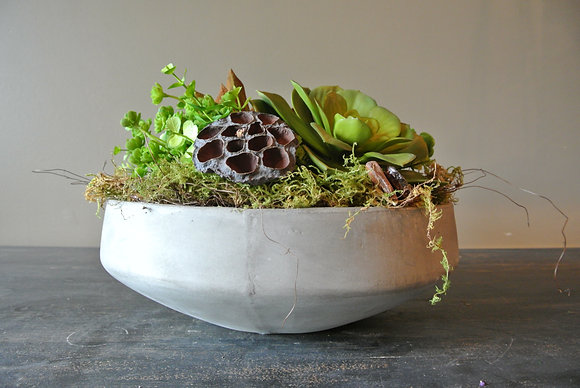 Bundle of Succulents and Plants in Newport Bowl