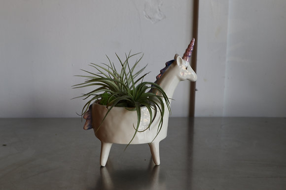 White Unicorn with Air Plants