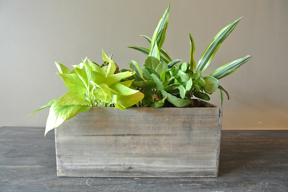 Mix of Small Plants in Rectangle Wood Base
