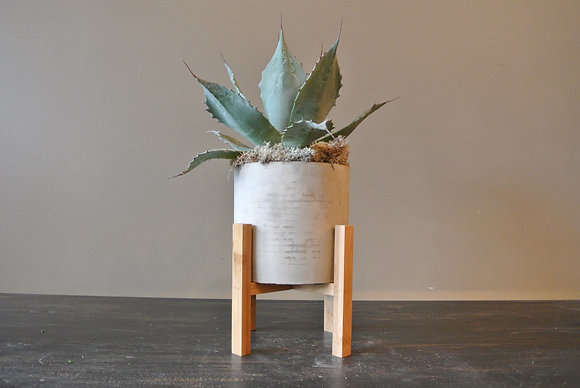 Pointed End Succulent with Stand