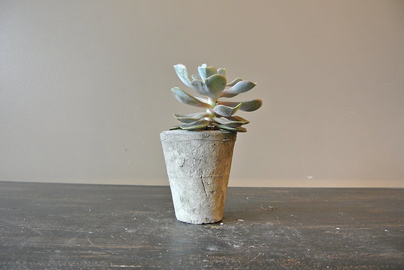 Tall Echeveria in Gray Textured Pot