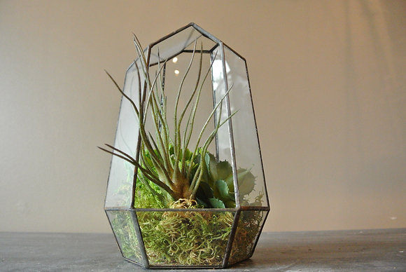 Small Bundle of Succulents in Terrarium