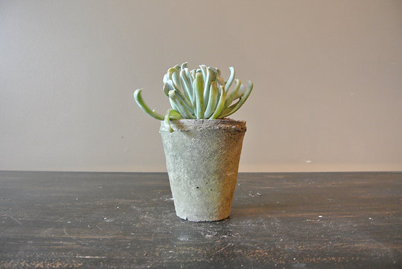 Straight Arm Succulent in Gray Textured Pot
