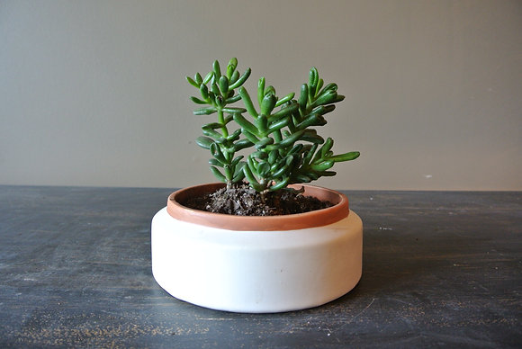 Group of Long Succulents in White & Tan Stripped Pot