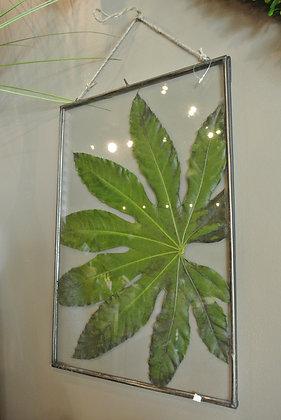 Big Leaf in Large Clear Frame