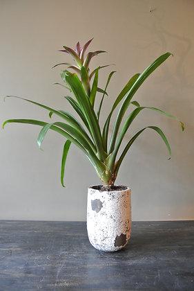 Tall Plant in Vintage Vase