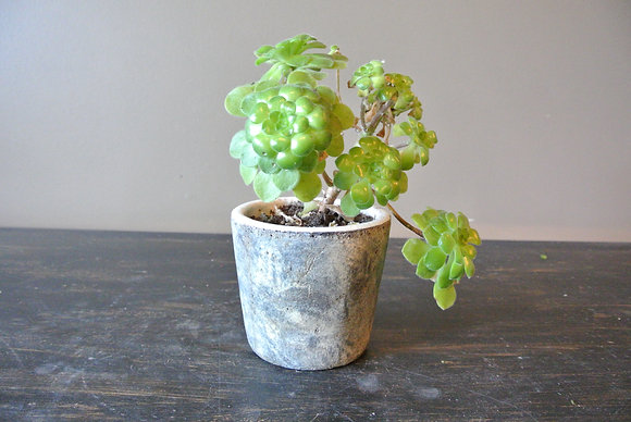 Small Leaf Plant in Gray Textured Pot