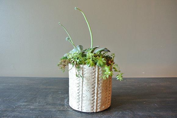 3 Stem Succulent in Patterned Pot
