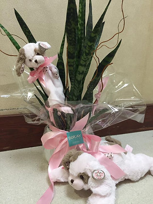 Baby Girl Plant with Stuffed Animal Gifts