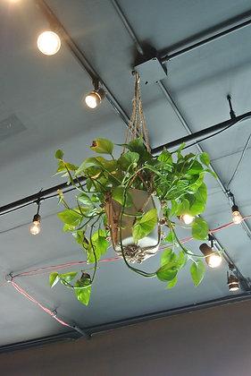 Hanging Planter in White Pot