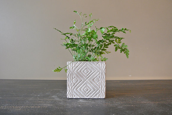 White Footprint Plant in Patterned Pot