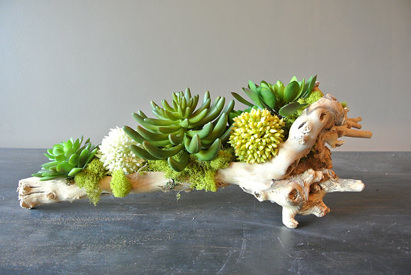 Succulents Hanging by a Branch