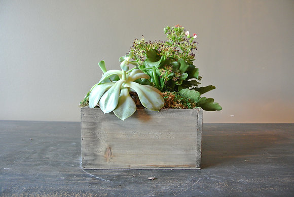 Plant and Double Succulents in Wood Base