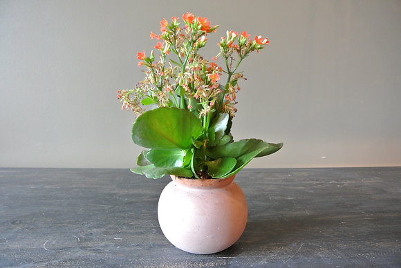 Tiny Coral Flower in Light Pink/Coral Pot