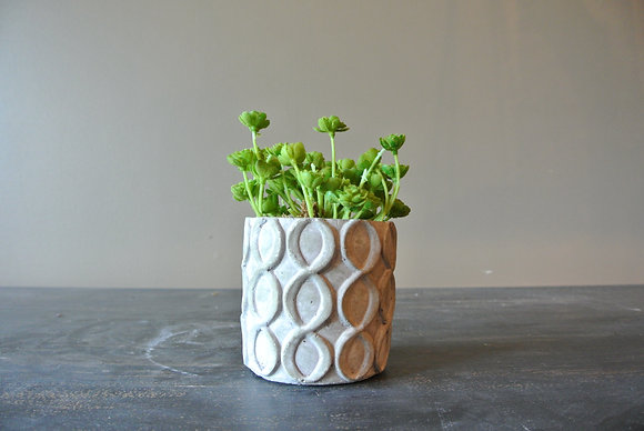 Tiny Succulents in Patterned Pot