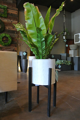 Plant in White & Speckled Gray Planter
