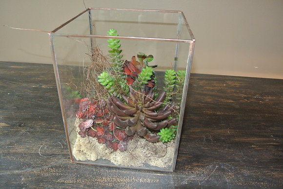 Bunch of Succulents in Square Terrarium
