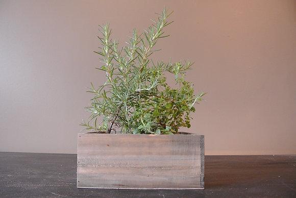 Oregano & Rosemary Plant in Wood Base