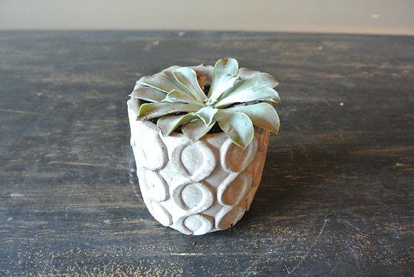 Low Succulent in Patterned Vase