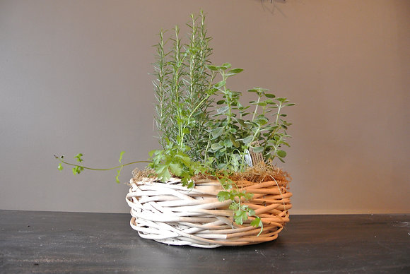 Cilantro, Oregano, and Rosemary Plant in Large Basket