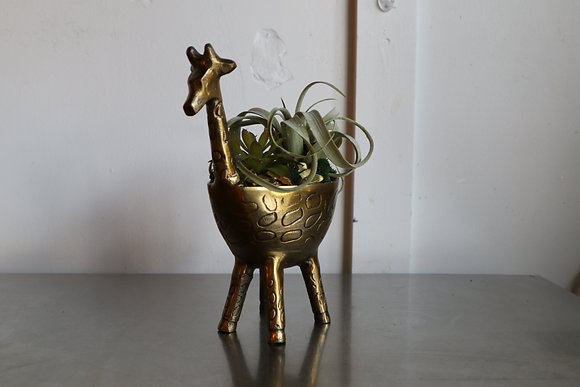 Gia Giraffe with Succulents and Air Plant