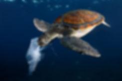 tortue ocean.jpg