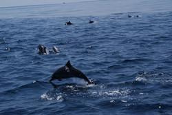 Mirissa whale 3