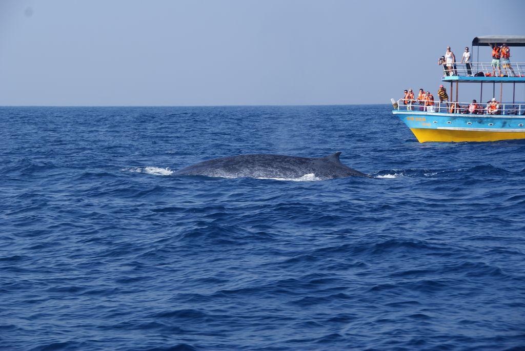 Mirissa whale 2