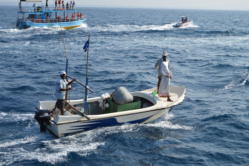 Mirissa whale 4