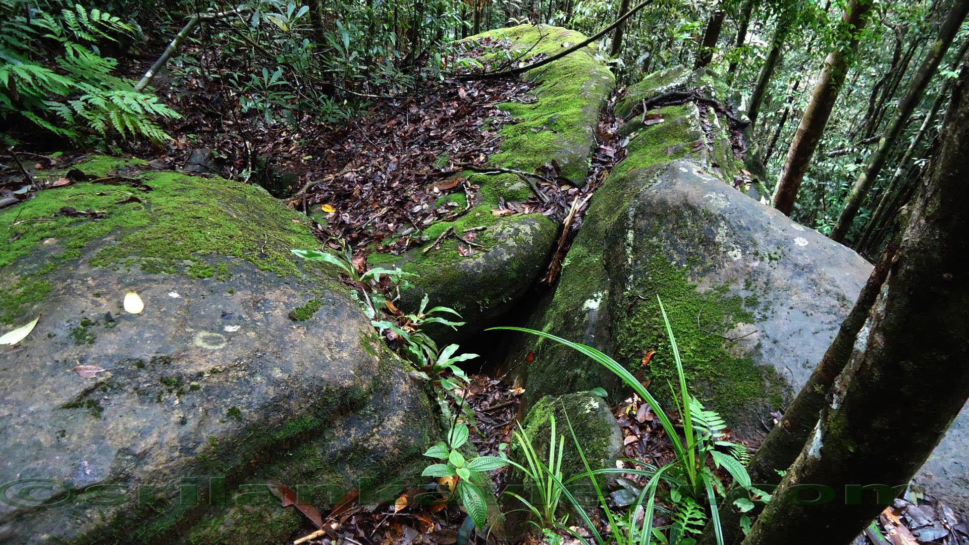 Sinharaja Rainforest 4