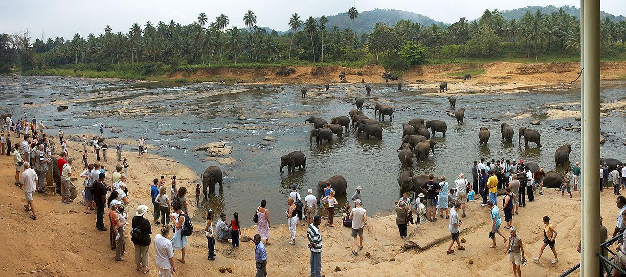 Pinnawala Elefanten 2