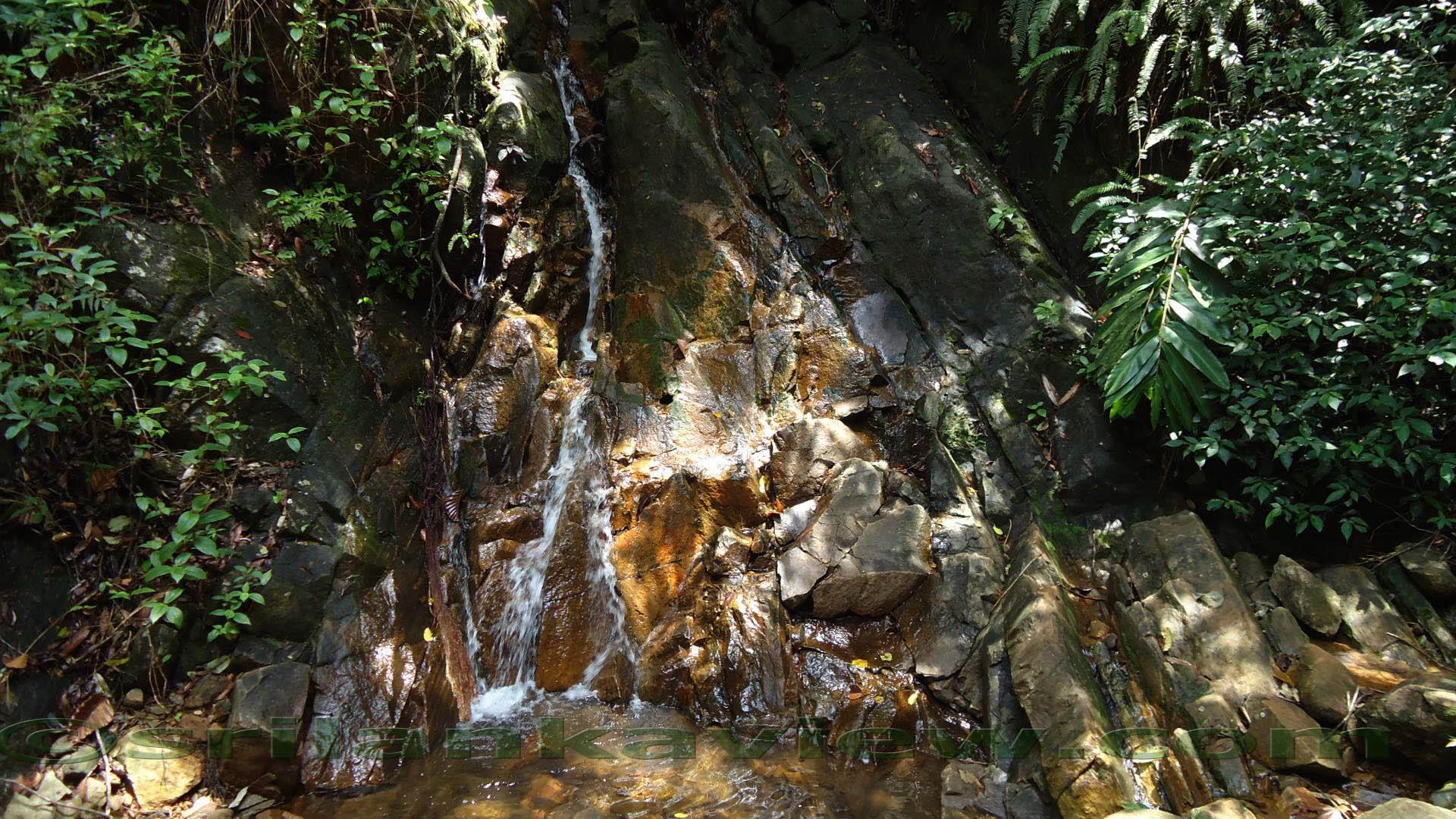 Sinharaja Rainforest 3