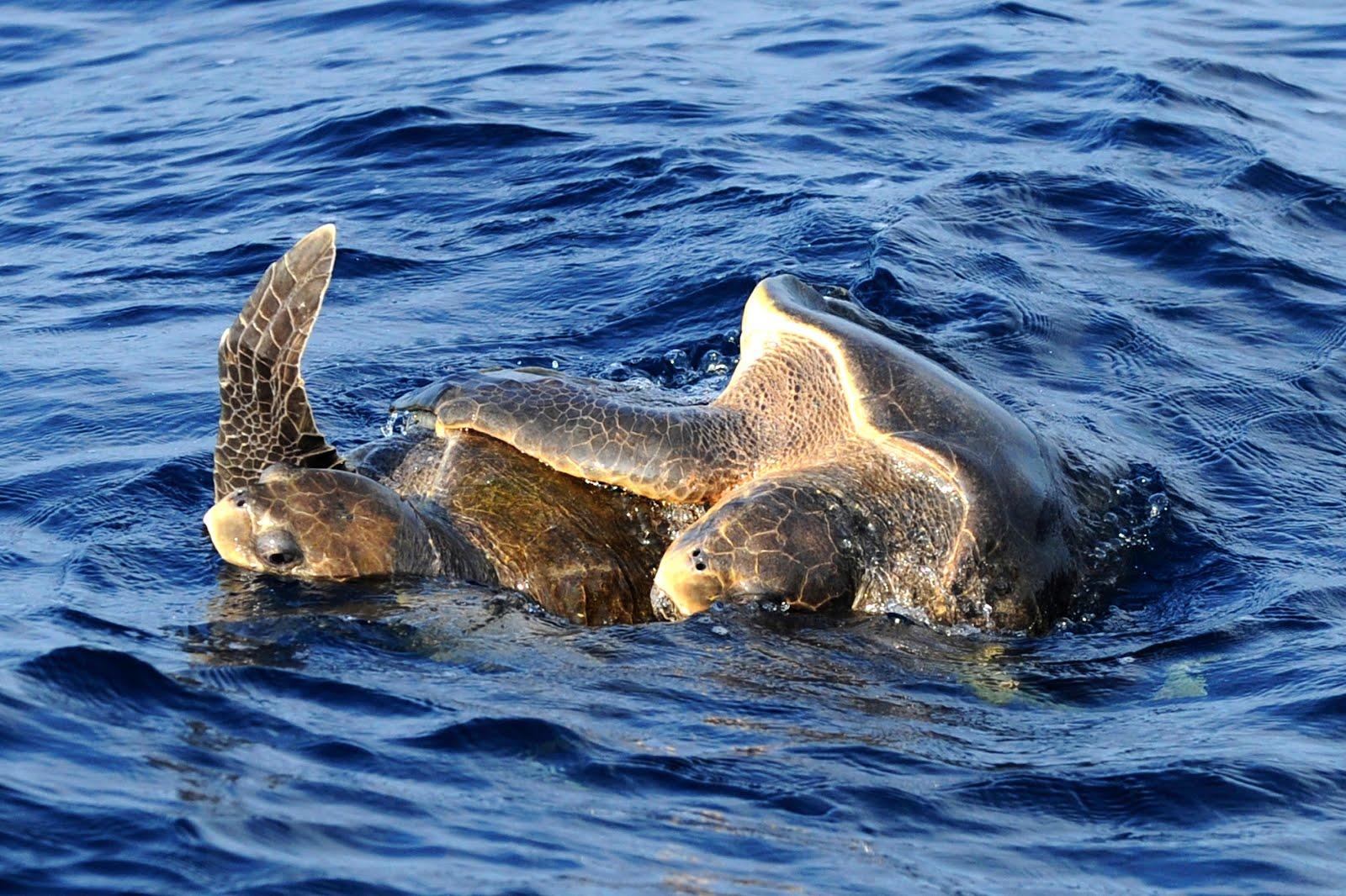 Mirissa whale 1