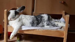 konijnenhotel.jpg
