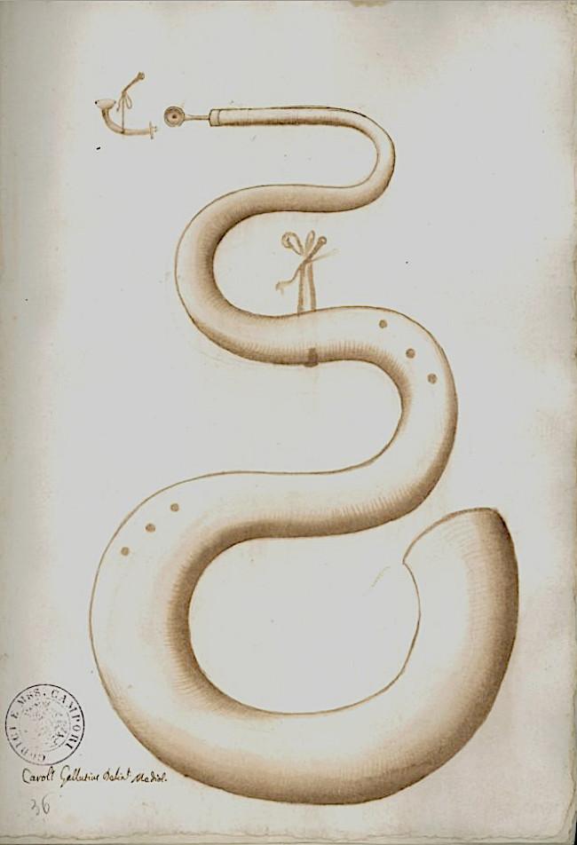 Serpent, Codex Settala, vers 1650, Ref. Gamma.h.1.22, Biblioteca Estense Universitaria, Modena.