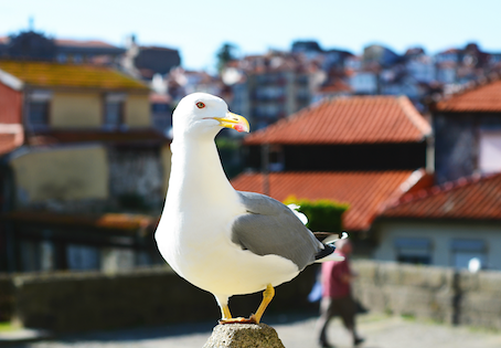 Learn the Names of 100 Animals in Portuguese