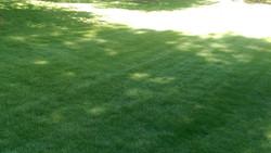 Pristine yard