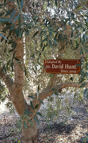 Your Family Tree With Wooden Sign
