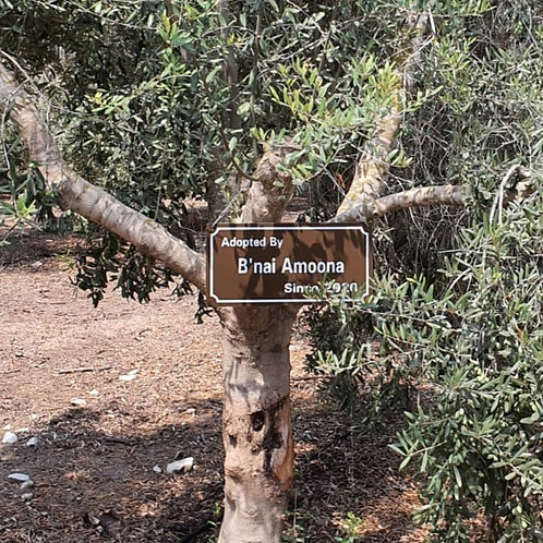 Communal tree With Metal Sign