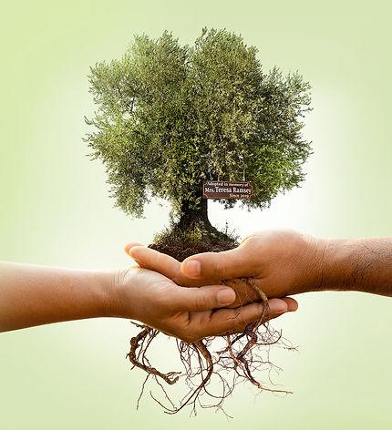 Roots-img@2x.jpg