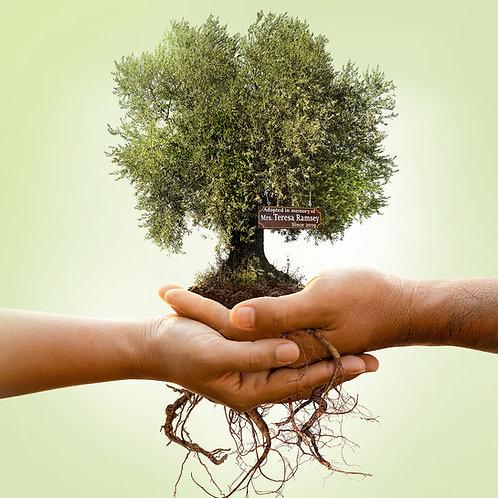 Tree in Israel through Mia