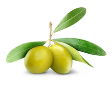 My Tree_Presentation_olives.png