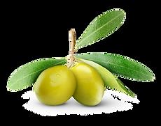 My Tree_Presentation_olives.png