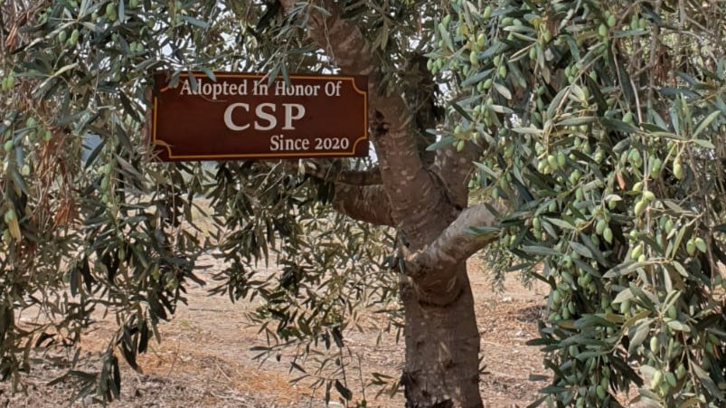 Communal Tree With Wooden Sign