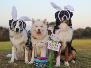 Happy Easter 2020!