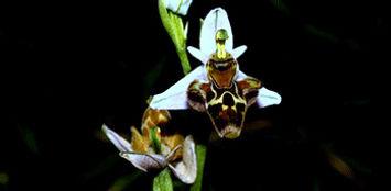 orkide-turu-botanik-turu-doğa-haftasonu-
