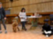 Dog Training 2.jpg