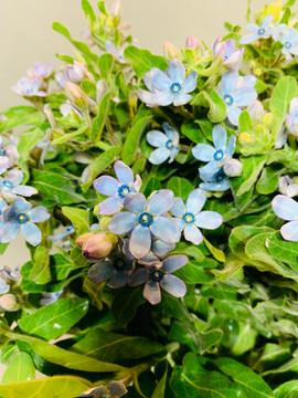 Blue Twidiea